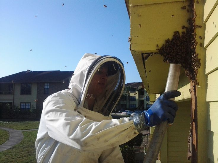 Melbourne Bee Removal Bee Extermination Services